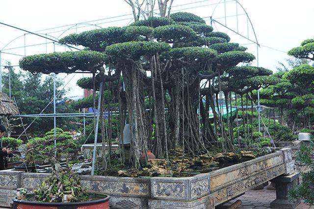 Dành cả thanh xuân tạo tác cây sanh cổ, kết quả thu được khiến ai cũng mê - 12