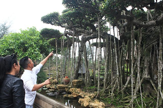 Dành cả thanh xuân tạo tác cây sanh cổ, kết quả thu được khiến ai cũng mê - 5