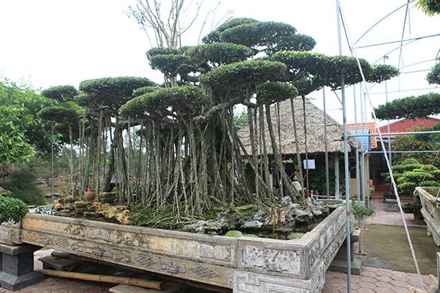 Dành cả thanh xuân tạo tác cây sanh cổ, kết quả thu được khiến ai cũng mê - 6
