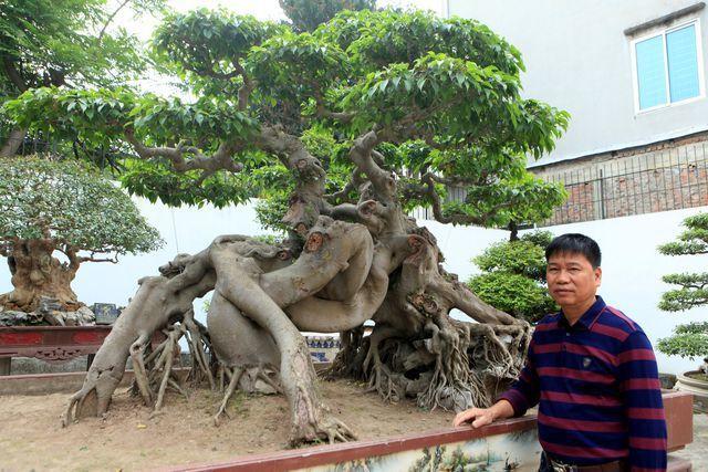 Choáng ngợp những vườn cây triệu đô độc nhất, vô nhị của đại gia Việt - 3