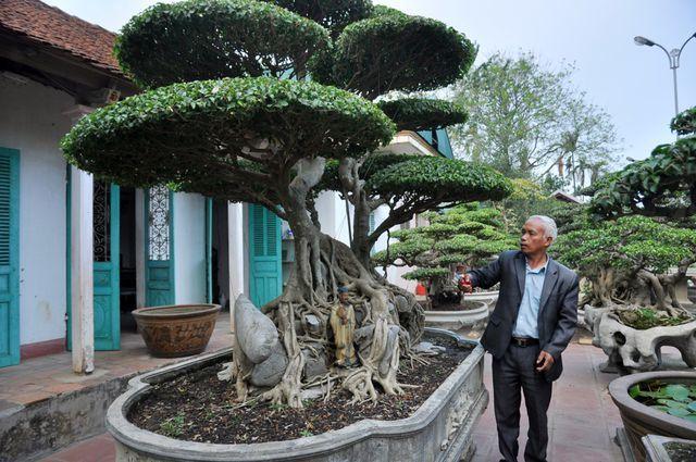 Choáng ngợp những vườn cây triệu đô độc nhất, vô nhị của đại gia Việt - 8