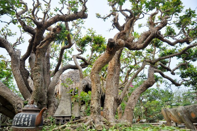 Choáng ngợp những vườn cây triệu đô độc nhất, vô nhị của đại gia Việt - 9