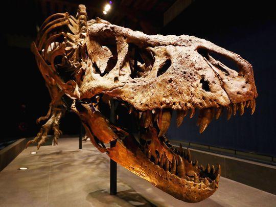 Công khai rao bán hóa thạch khủng long độc nhất thế giới giá gần 70 tỷ đồng
