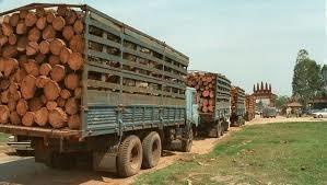 Việt Nam chi tỷ USD nhập lượng lớn gỗ, cao su và hạt điều từ Lào và Campuchia