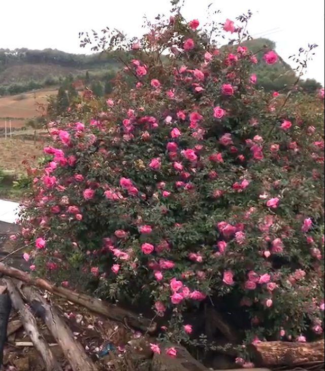 Vạn chai nước siêu rẻ ngày nắng nóng; cây hoa hồng trả 150 triệu đồng chưa gật đầu - 4