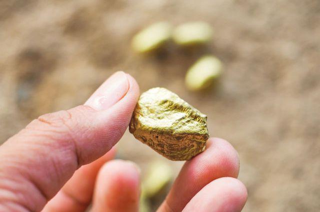 Dắt chó đi dạo, bất ngờ vớ được quặng vàng gần 600 triệu đồng - 1