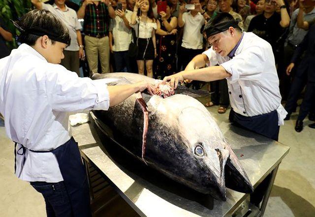 Đầu bếp Hà thành hì hục mổ cá ngừ vây xanh khủng, nặng 200kg - 3