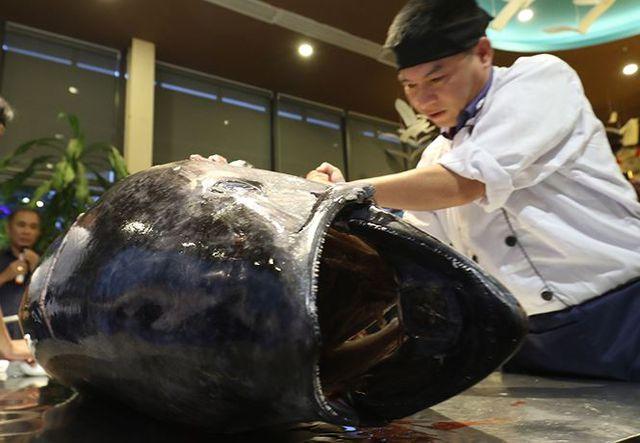 Đầu bếp Hà thành hì hục mổ cá ngừ vây xanh khủng, nặng 200kg - 4