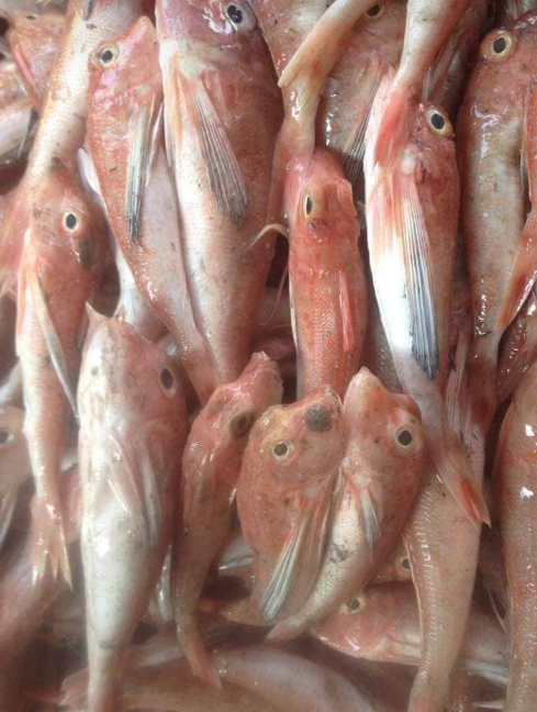 Cá đùi gà thực chất là cá chuồn, không phải cá nóc!