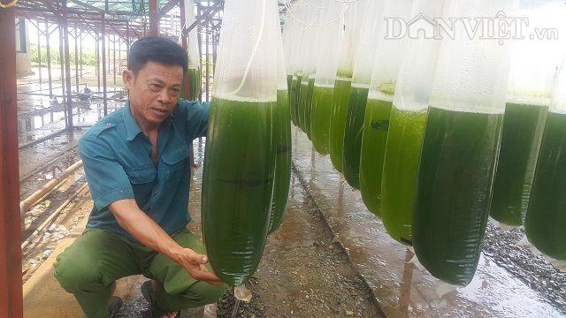 Chuyện lạ Thái Bình: Chế ngàn lít nước xanh lè, rót bán hàng tỷ đồng