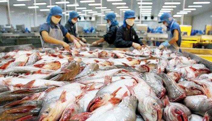 Tin xấu cho loạt đại gia thuỷ sản: Xuất khẩu cá tra khó thoát