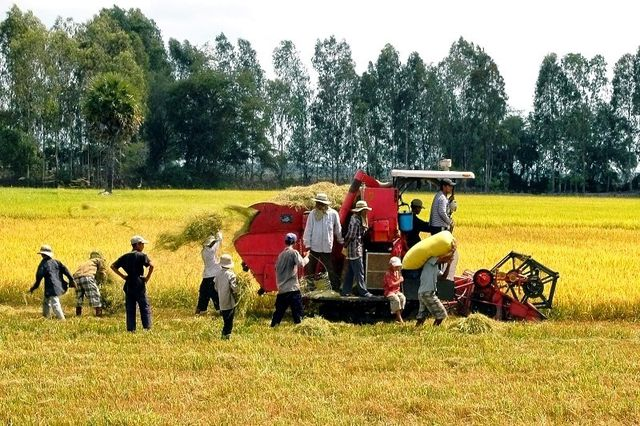 Trung Quốc giảm nhập, xuất khẩu gạo của Việt Nam trở lên khó khăn - 3
