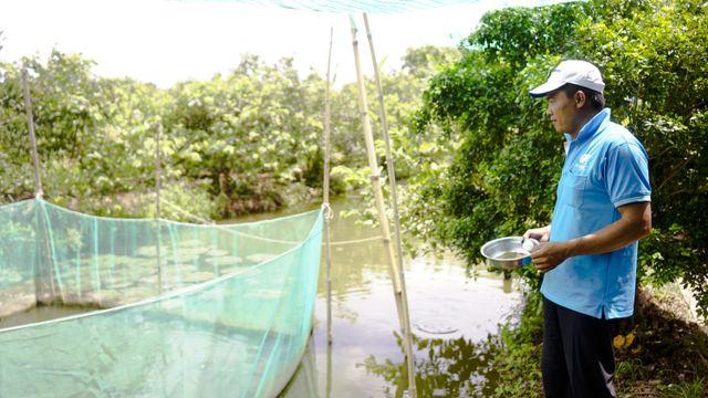 """Đàn cá lóc biết """"nhảy múa"""" trên mặt nước ở Cần Thơ, thu về 70 triệu mỗi tháng - 4"""