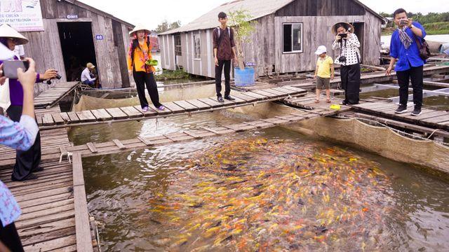 """Đàn cá lóc biết """"nhảy múa"""" trên mặt nước ở Cần Thơ, thu về 70 triệu mỗi tháng - 7"""
