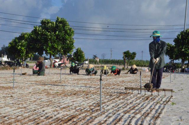Đảo Lý Sơn: Đất nông nghiệp bị thổi giá gấp 20 - 30 lần - 1