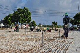 Đảo Lý Sơn: Đất nông nghiệp bị