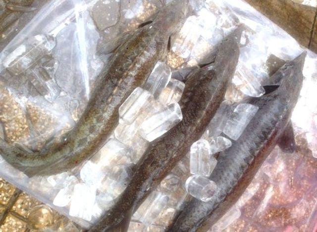"""Dân TPHCM """"đổ xô"""" mua cá tầm 100.000 đồng/kg ủng hộ người nuôi cá vùng lũ - 3"""