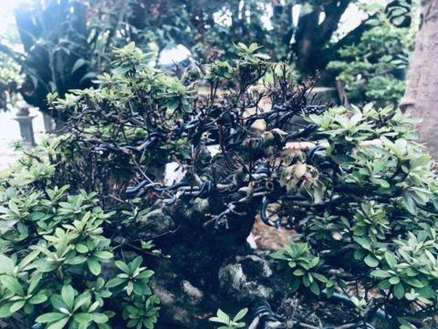 Thê thảm vườn Trầm Bê, loạt đại gia mất trắng chục tỷ - 1