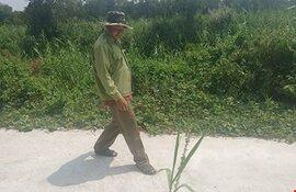 Li kì hành trình theo dấu mãng xà U Minh Hạ: Rắn hổ mây bằng cột đèn