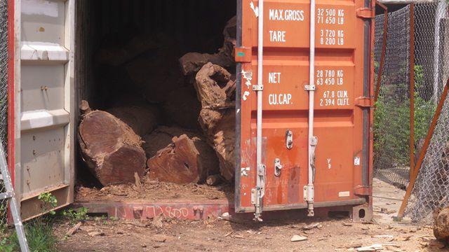 Hà Nội: Số phận lô gỗ sưa trăm tỷ thôn Phụ Chính sắp được định đoạt - 2