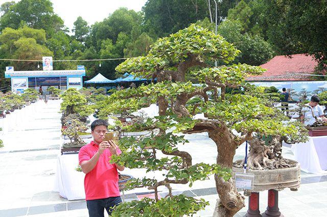 Ngắm cây hoa giấy bonsai được tạo tác như thác đổ - 8