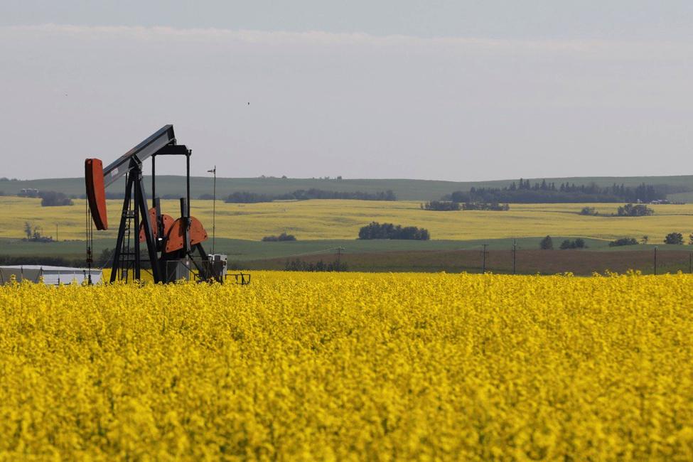 Canada thách thức lệnh cấm dầu hạt cải của Trung Quốc tại WTO