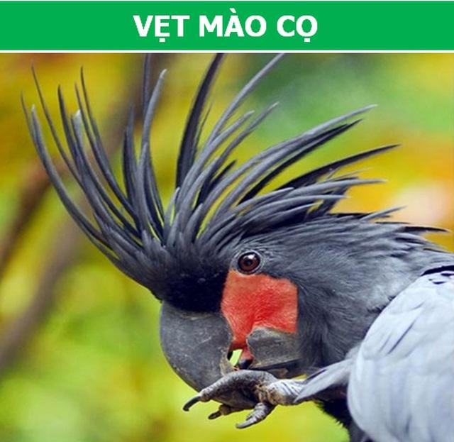Những loài động vật kỳ lạ, giá trên trời vẫn được các đại gia săn lùng  - 3
