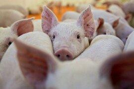 Giá lợn đã chạm đáy, sẽ tăng dần về cuối năm?