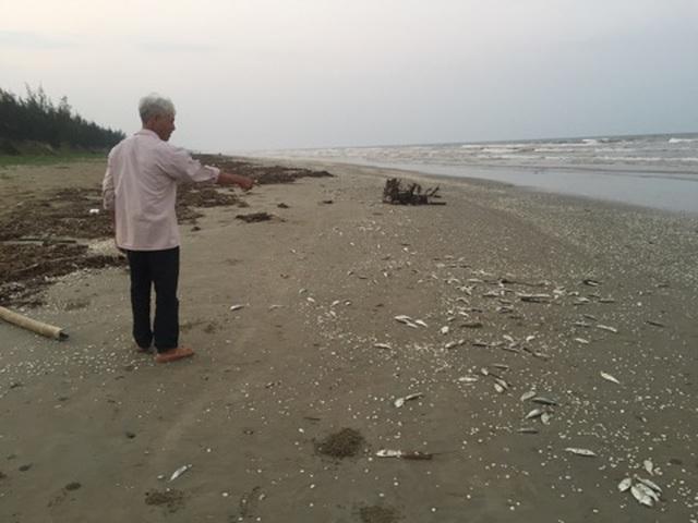 Gần 2 tấn cá chết trôi dạt vào bờ biển Hà Tĩnh - 3