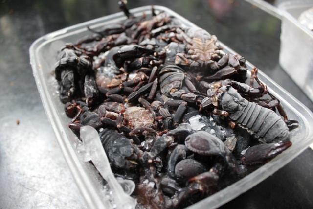 500 nghìn một cân bọ cạp, chị em không tiếc săn lùng làm món nhậu đãi chồng - 2