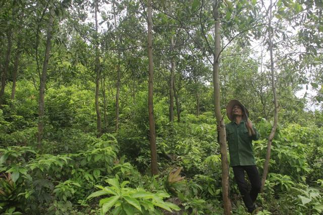 Vợ chồng trẻ Vân Kiều kiếm gần 150 triệu đồng/năm từ trồng rừng, nuôi dê - 2