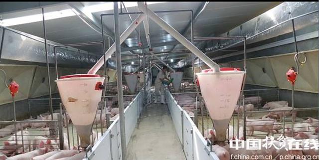 Nghỉ việc về quê nuôi 22 con lợn, nay thành đại gia khiến cả nước bất ngờ - 5