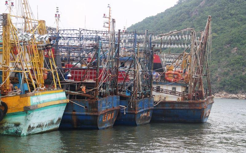 """Chủ tàu 67 """"cầu cứu"""" vì công ty bảo hiểm ngừng bán bảo hiểm tàu cá"""