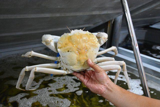 Ăn 1 con cua lạ giá 1 chỉ vàng, ngả mũ chơi sang của nhà giàu Việt - 3