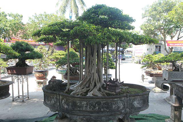 """Chiêm ngưỡng """"chùa Đồng"""" dưới bóng cây sanh tiền tỷ - 15"""