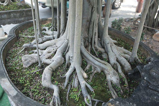 """Chiêm ngưỡng """"chùa Đồng"""" dưới bóng cây sanh tiền tỷ - 6"""