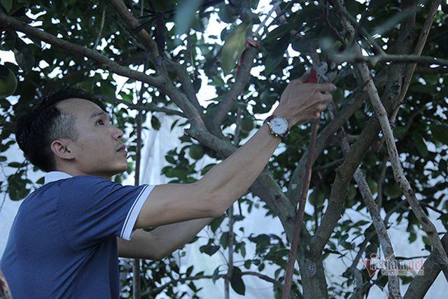 Đồi cam 6 tỷ đồng kỳ lạ nhất Việt Nam, 2.000 cây mắc màn trắng cả rừng - 9