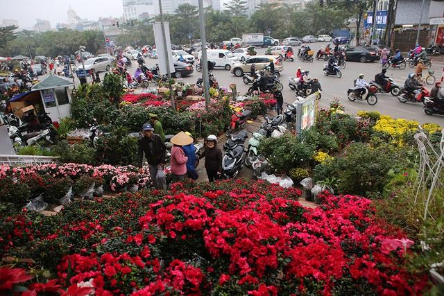 Sôi động chợ hoa Tết lớn nhất Hà Nội - 1