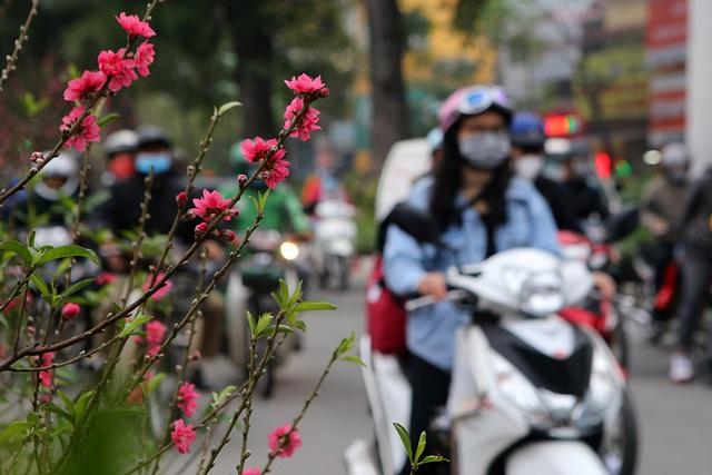Sôi động chợ hoa Tết lớn nhất Hà Nội - 6