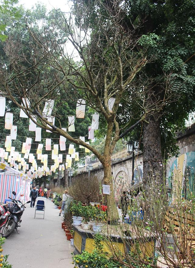 Đại gia chi hơn 3 tỷ đồng vẫn không mua nổi cây Hoàng mai 120 tuổi - 1
