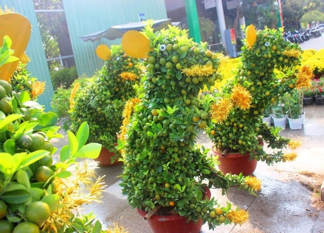 Độc đáo quất bonsai hình chuột, quả chi chít ở chợ Tết - 3