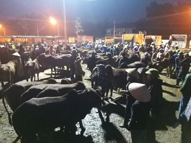 Nhộn nhịp phiên chợ trâu, bò lớn nhất miền Bắc - 3