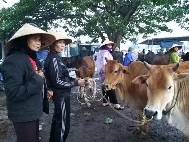 Nhộn nhịp phiên chợ trâu, bò lớn nhất miền Bắc - 7