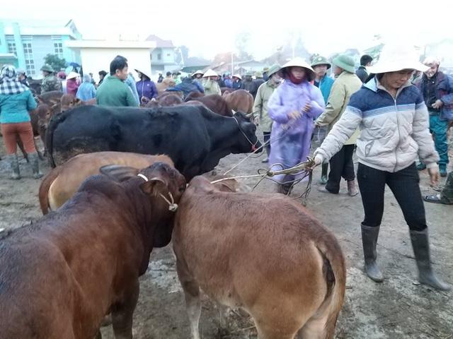 Nhộn nhịp phiên chợ trâu, bò lớn nhất miền Bắc - 9
