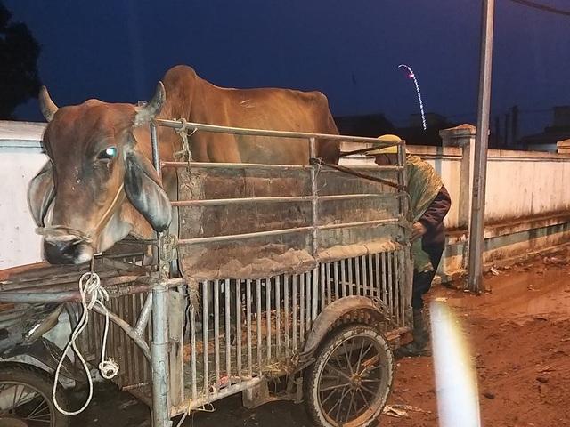 Nhộn nhịp phiên chợ trâu, bò lớn nhất miền Bắc - 10