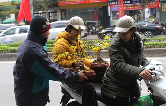 Chán mai, đào siêu to khổng lồ, dân Hà Nội chuyển sang chơi cây cảnh mini - 1