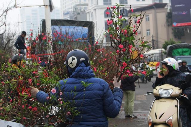 Chán mai, đào siêu to khổng lồ, dân Hà Nội chuyển sang chơi cây cảnh mini - 4