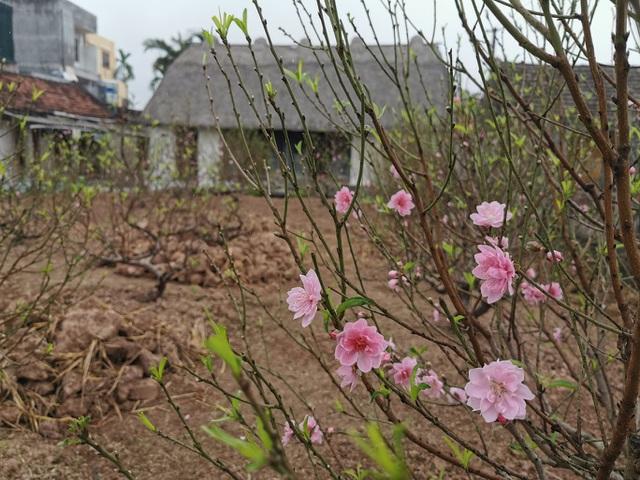 Mê mẩn với vẻ đẹp mộc mạc của ngôi nhà mái rạ ở miền quê gạo tám - 2
