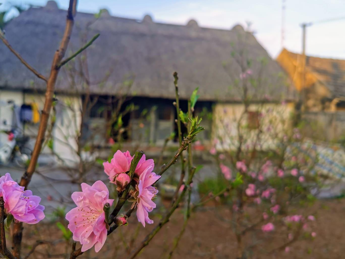 Mê mẩn với vẻ đẹp mộc mạc của ngôi nhà mái rạ ở miền quê gạo tám
