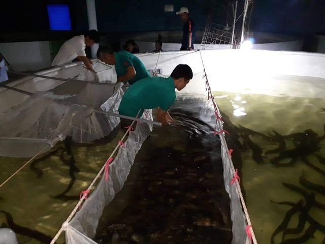 Quảng Bình: Kiếm tiềm tỷ nhờ nuôi cá chình trên cát trắng - 4